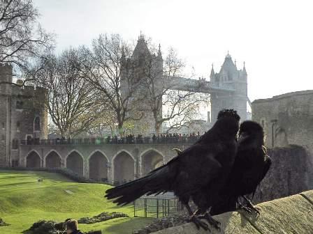 ロンドン塔の画像 p1_37
